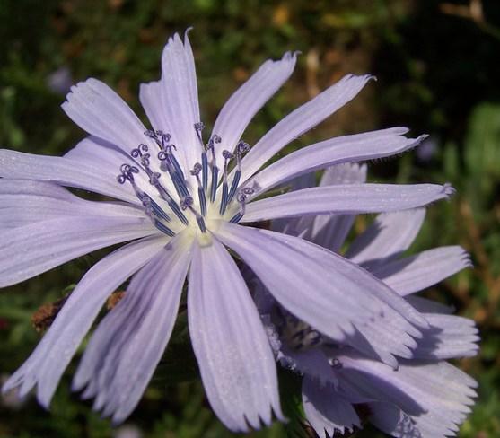 Purple Flowers West Lorne, Ontario Canada