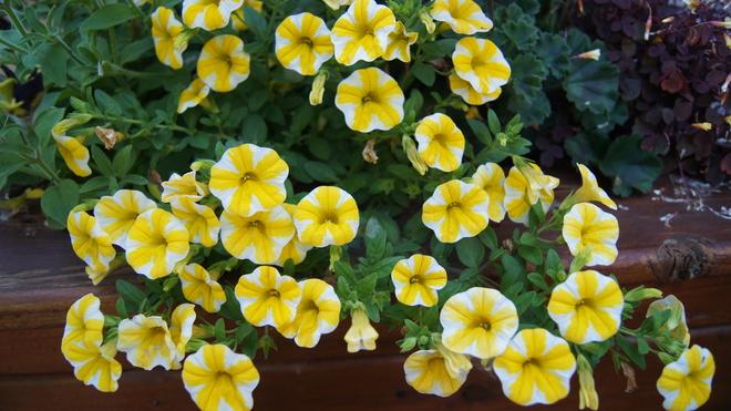 Yellow Brossard, Quebec Canada