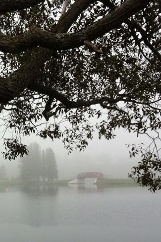 Foggy Morning Cochrane, Ontario Canada