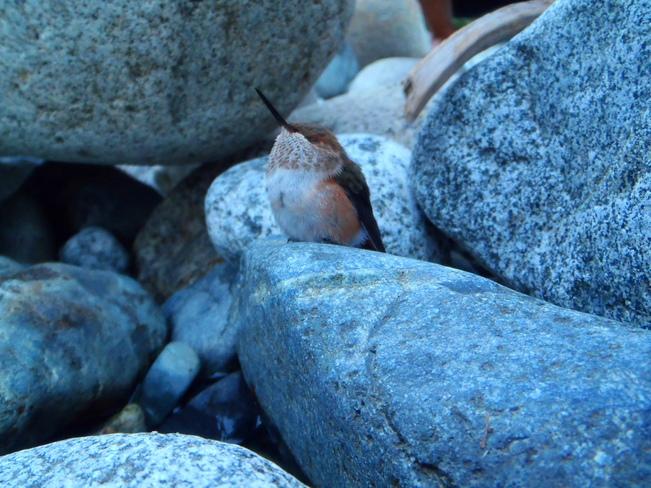 our friend North Vancouver, British Columbia Canada