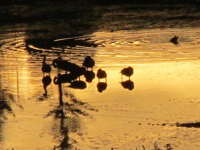 Golden Pond Calgary, Alberta Canada