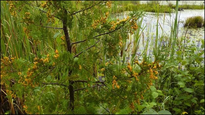 Sherriff Creek, wet day at the pond. Elliot Lake, Ontario Canada