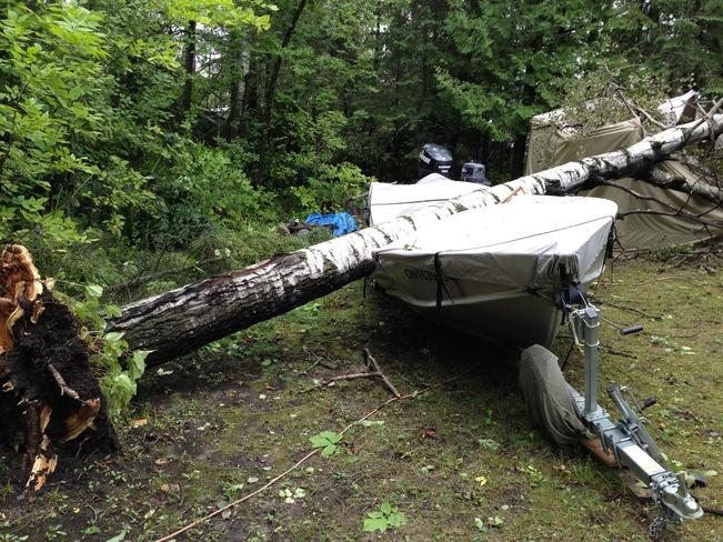 tree on boat in asabaska park Bergland, Ontario Canada