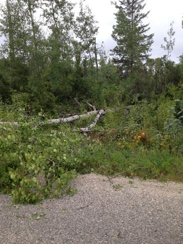 trees down Big Grassy River 35G, Ontario Canada