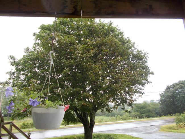 Heavy Rain Truro, Nova Scotia Canada