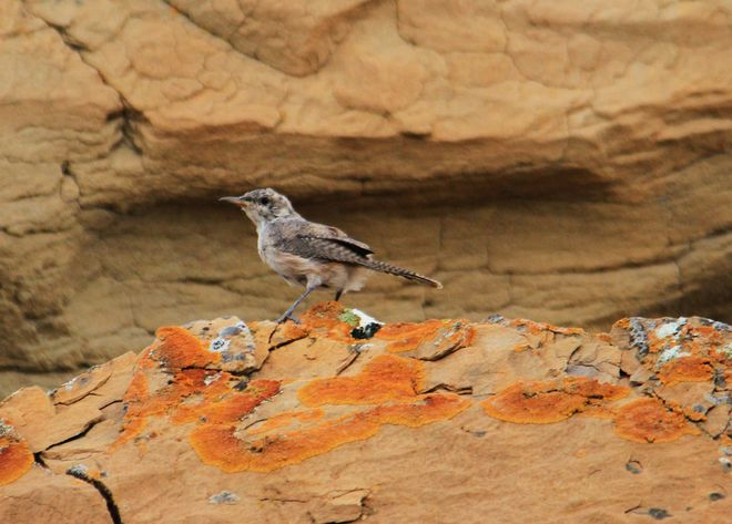 small unidentified bird Brooks, Alberta Canada