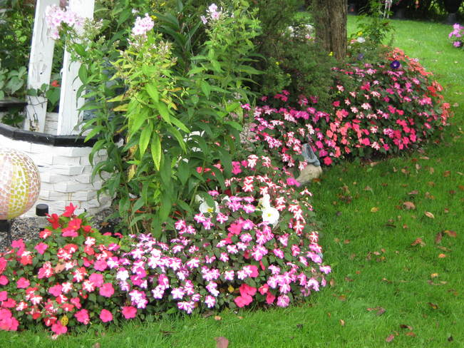 Random flower pics Markstay, Ontario Canada