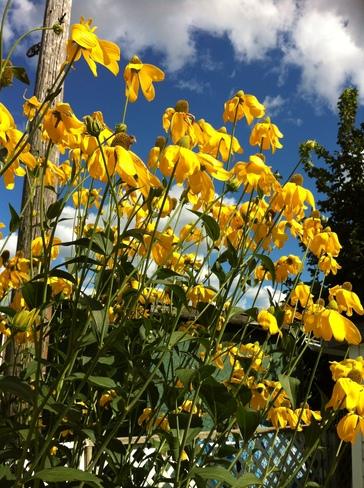 Flowers Oshawa, Ontario Canada