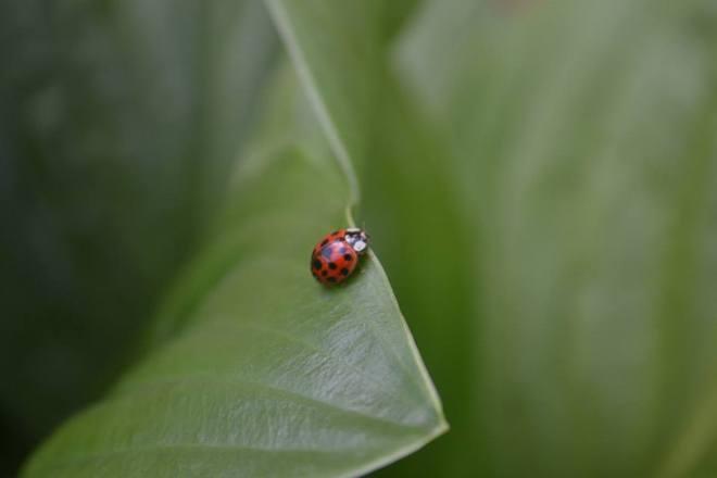Lady bug London, Ontario Canada