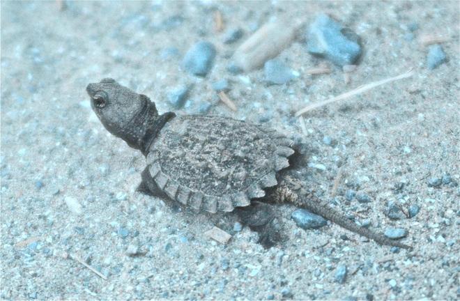 Just hatched Wellington, Ontario Canada