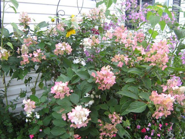 My gardens Markstay, Ontario Canada