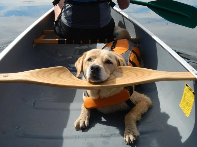 Canoeing with the Dog Williams Lake, British Columbia Canada
