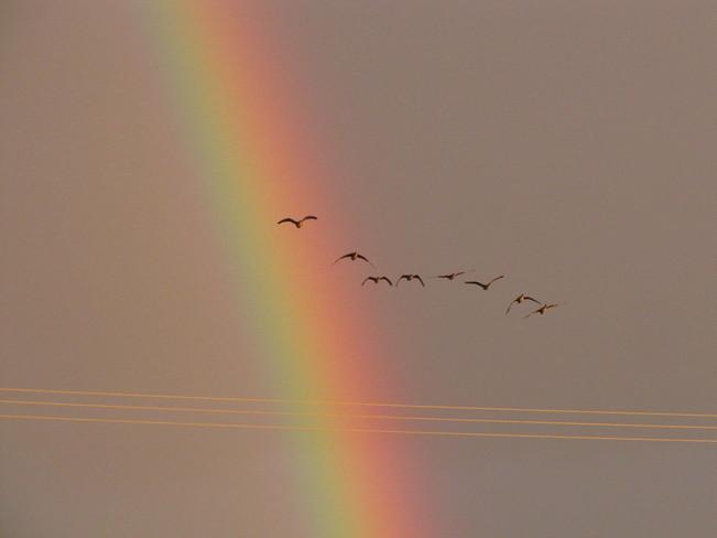 Rainbows Churchill, Manitoba Canada