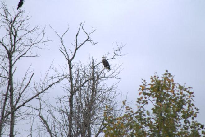 Crow & Eagle Timmins, Ontario Canada