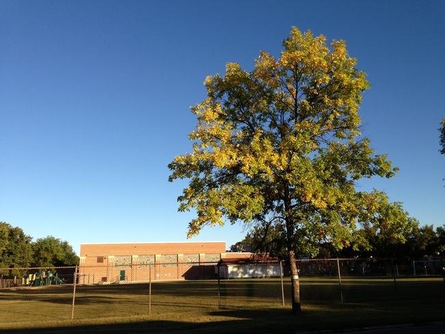 leaves turning gold Winnipeg, Manitoba Canada