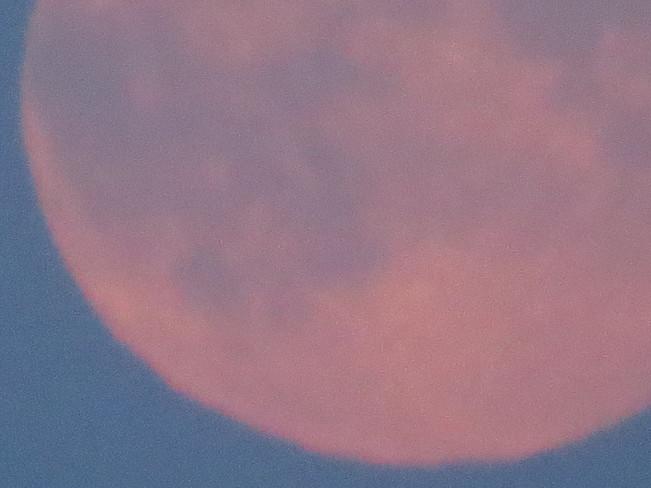 Pink Early Evening Moon Devon, Alberta Canada