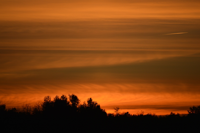 Tangerine dream Prince Albert, Saskatchewan Canada