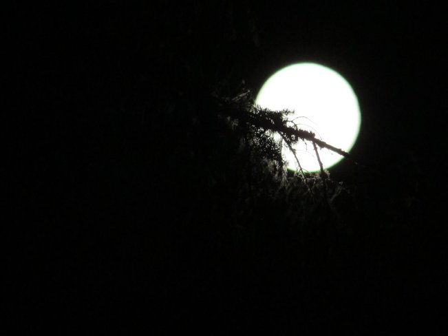 West Coast Harvest Moon Sooke, British Columbia Canada