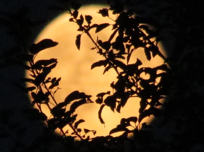Harvest Moon Peterborough, Ontario Canada
