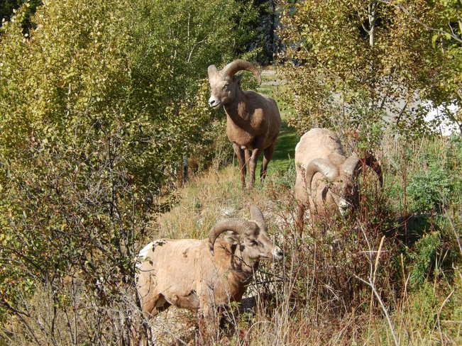 Nice neighbours! Golden, British Columbia Canada