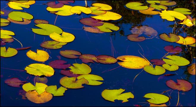 Sherriff Creek, fall pads. Elliot Lake, Ontario Canada