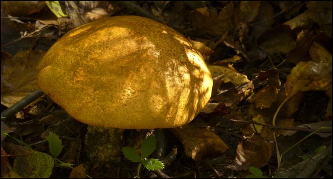 Sherriff Creek red trail, new mushroom. Elliot Lake, Ontario Canada