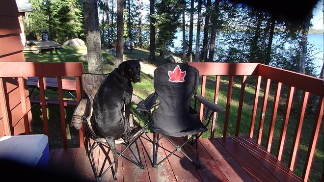 Winston takes his seat on the deck Thunder Bay, Ontario Canada