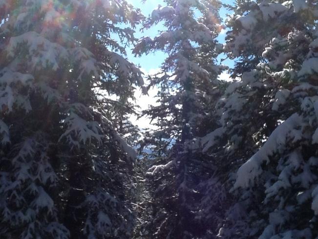Light snow Banff, Alberta Canada