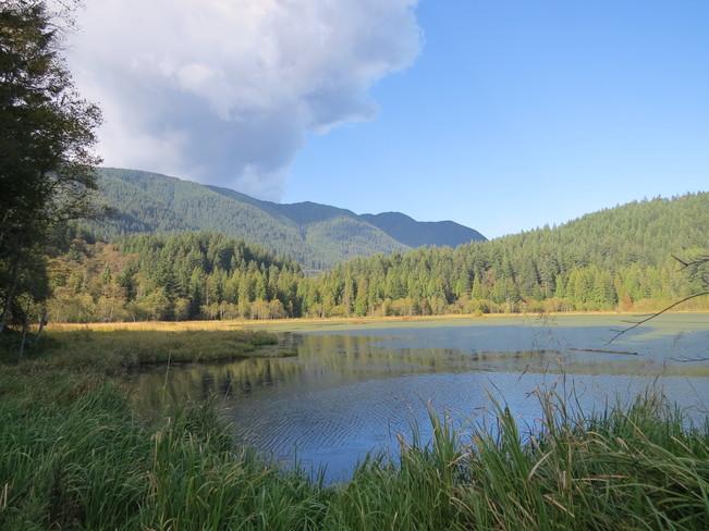 Wetlands Port Coquitlam, British Columbia Canada