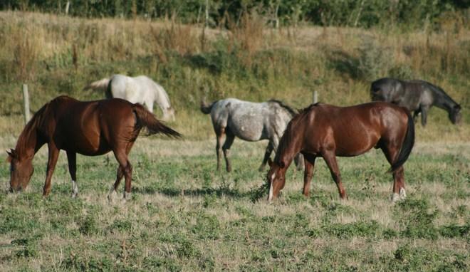 The Herd Unity, Saskatchewan Canada