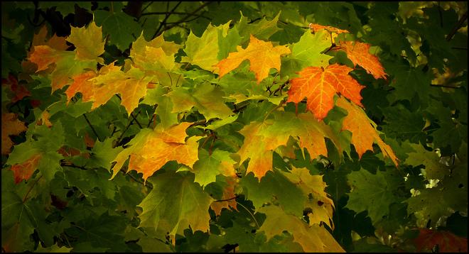 Near Esten Dr., colour progression. Elliot Lake, Ontario Canada