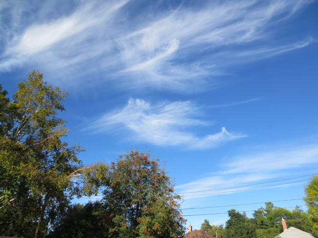 Hummingbird cloud Peterborough, Ontario Canada