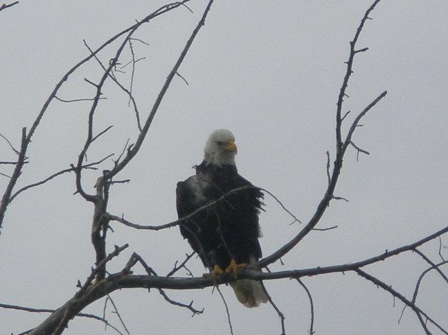 Hecla eagle patio#1 Hecla, Manitoba Canada