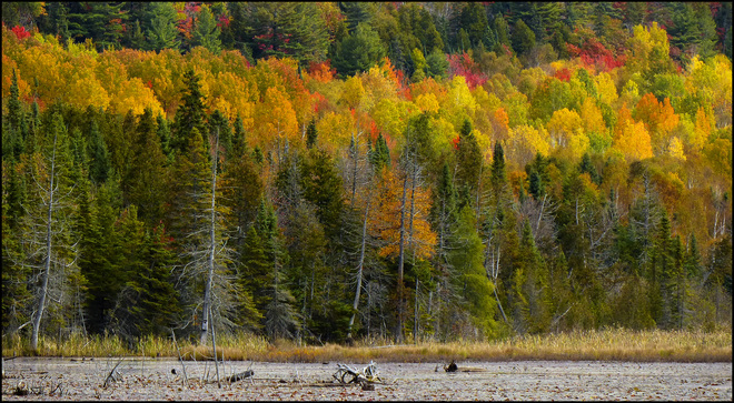Sherriff Creek fall scenic. Elliot Lake, Ontario Canada