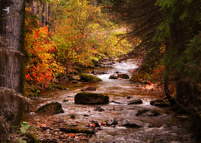 Autumn trickles Cranbrook, British Columbia Canada