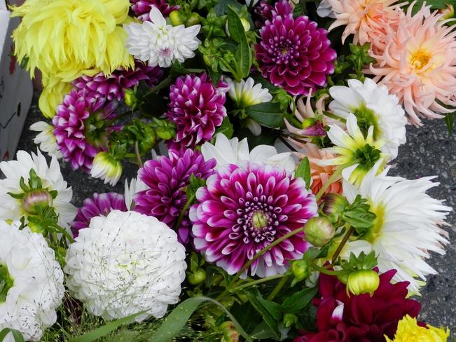Flowers at Farmers Market Penticton, British Columbia Canada