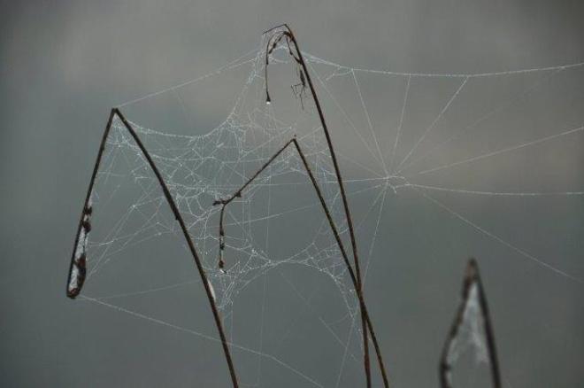 Wacky webs Erin, Ontario Canada