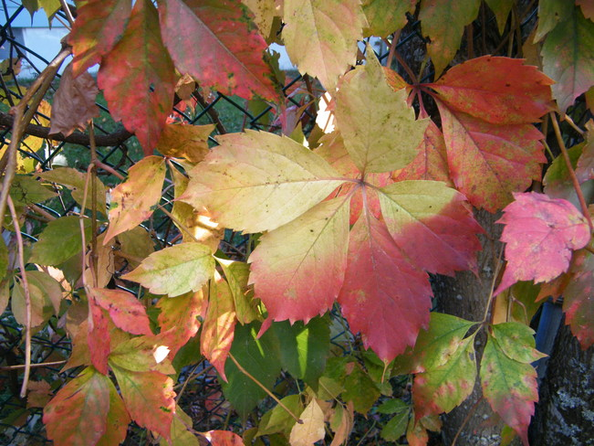 Fall colors Riverview, New Brunswick Canada