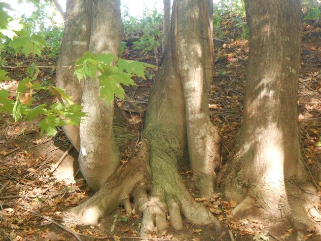 Strange Roots Canning, Nova Scotia Canada