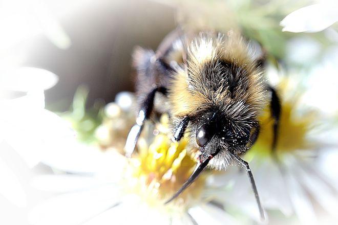 Busy Bee Goderich, Ontario Canada