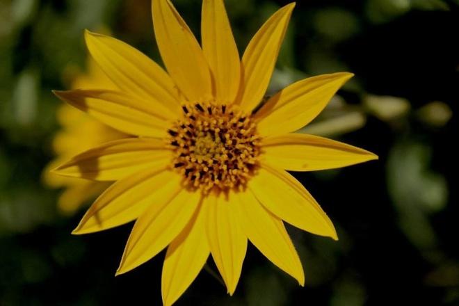 the flower of summer Winnipeg, Manitoba Canada