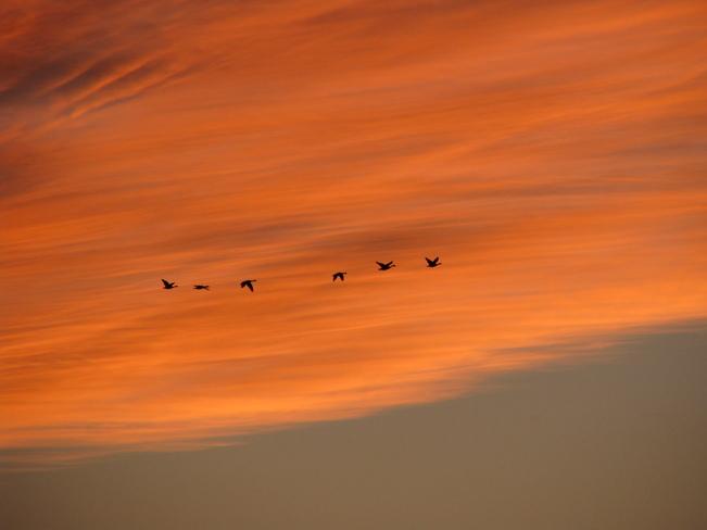 Sunset Flight Truro, Nova Scotia Canada