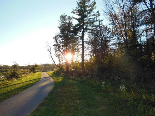 Sun between the trees Barrhaven, Ontario Canada
