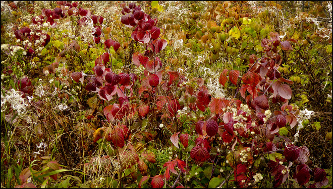Sherriff Creek field full of colour. Elliot Lake, Ontario Canada