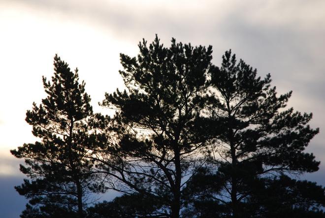 Backlit Trees Brandon, Manitoba Canada
