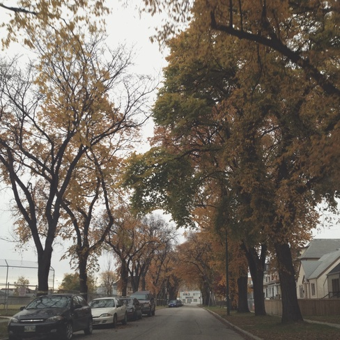 Having a walk Winnipeg, Manitoba Canada