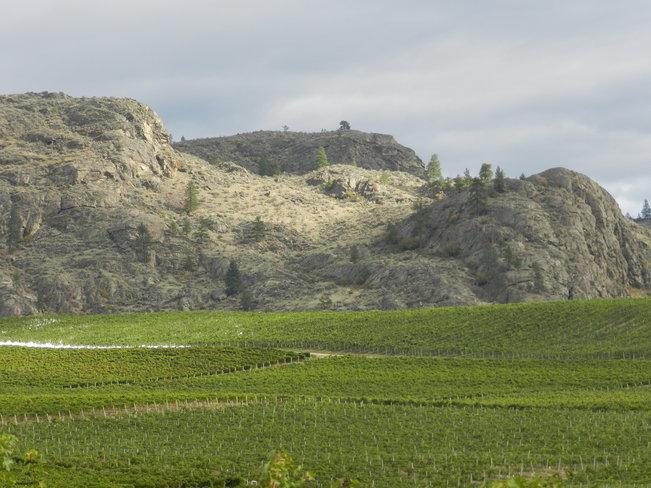 Black Sage Bench vineyards Osoyoos, British Columbia Canada