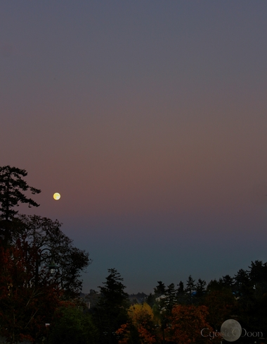 autumn moon View Royal, British Columbia Canada