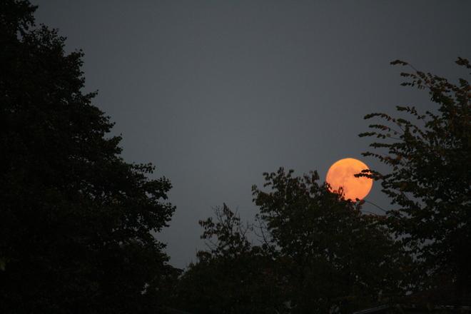 blood moon?