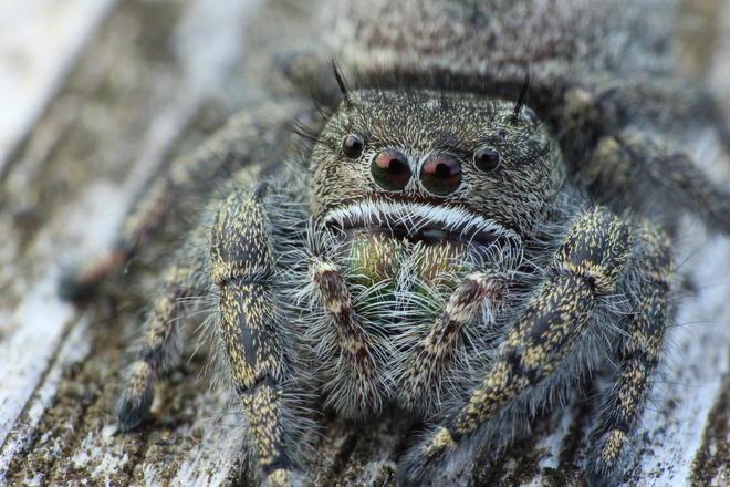 Beach spider Tobermory, Ontario Canada